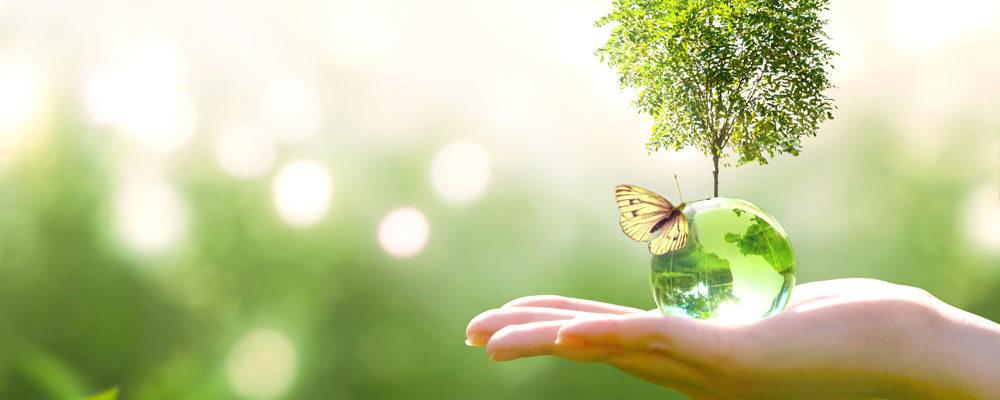 B27 | Environnement / ICPE